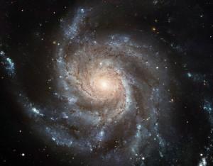 PLM Universum